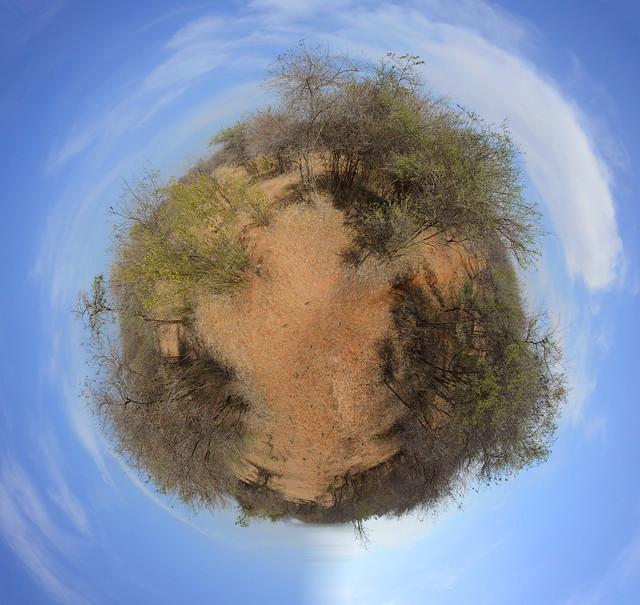 Savanna little earth