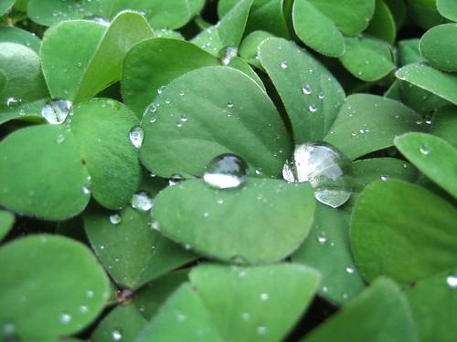 Poslije kiše | After the rain | by sheshnjak