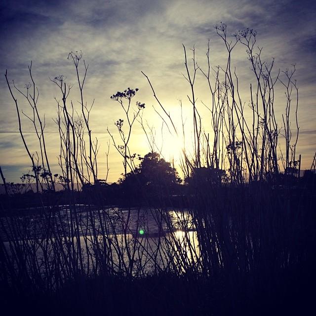 Baylands. #paloalto