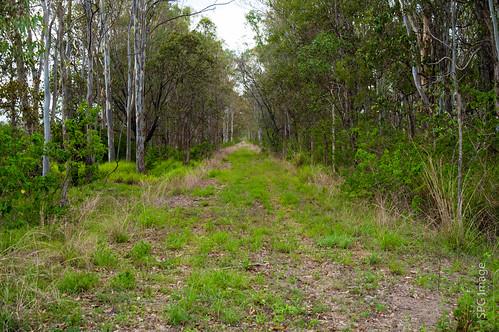 australia places queensland railways permanentway railwaylines wallaville railwayfacilities burnettwidebay queenslandprovincialregions qrmorganvillebranch