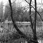 Swamp Forest,Sakarya-TR