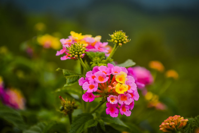 Beautiful flowers of Munnar!