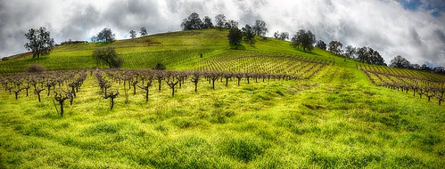 clouds storm hill grapevine spring green hills hdr travel winetasting wine amadorcounty california shenendoahvalley