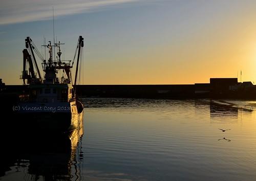 ireland sea sky irish sun bird sunrise pier boat town nikon harbour seagull silhouettes wicklow trawler countywicklow d5100 mygearandme mygearandmepremium mygearandmebronze mygearandmesilver mygearandmegold