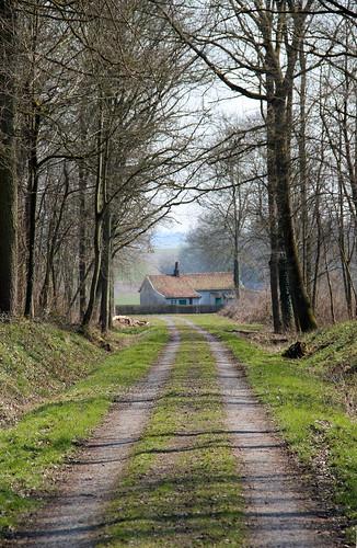 fagus fagussylvatica tree beech spring havrébelgique belgiqueenimages