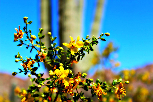life in Saguaro 1