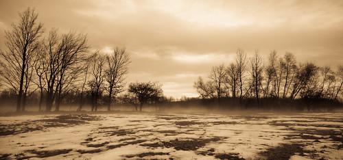 trees snow field fog sepia landscape tamron1024mmlens