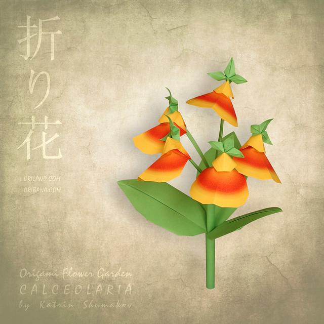 Origami Flower Garden. Calceolaria flower