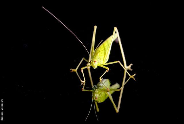 Grasshopper mirror