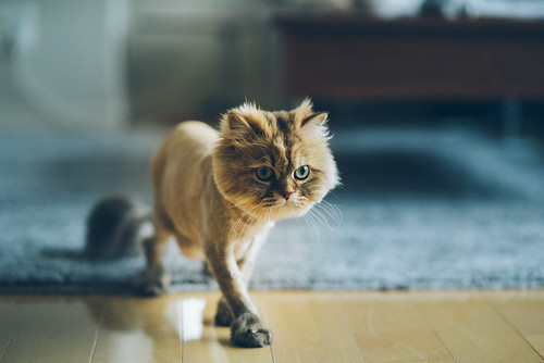 Little Lion | by torode