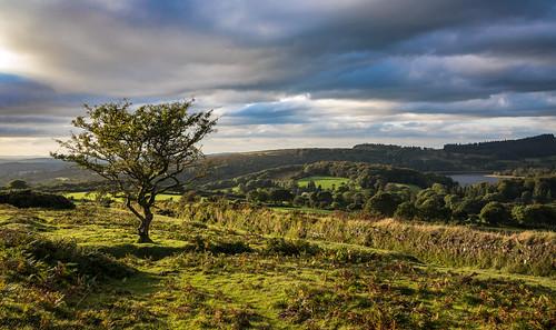 burrator dartmoor dartmoornationalpark devon englanduk moorland nationalparks uk westcountry hawthorn ringmoordown lonetree burratorreservoir