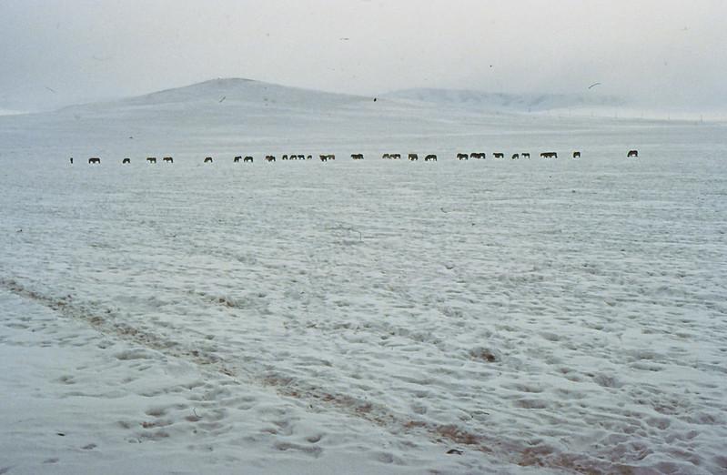 MONGOLIA 1994 01-0023
