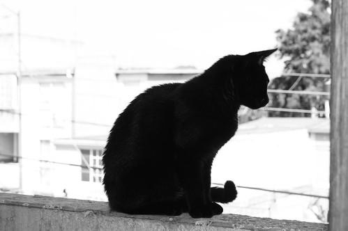 Silueta de gato negro