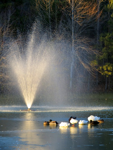 ice fountain tn tennessee waterfowl fairview frozenlake lakevan williamsoncounty bmok bmok2 bowienaturepark
