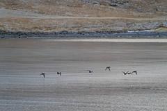 Snæfellsjökull Roadtrip