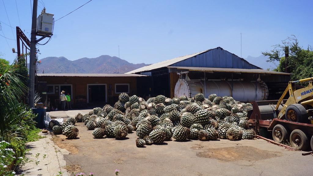 Resultado de imagen de fabrica tequila