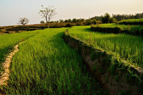 nikon d70 burma myanmar asia shanstate southeastasia birmanie asie asiedusudest landscape paysage ricefield rizière paddyfield pascalboegli outdoors ricepaddy outdoor getty