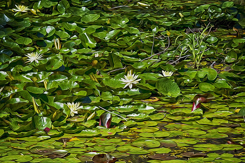 landscape pond waterlilies lilypads oilpainting