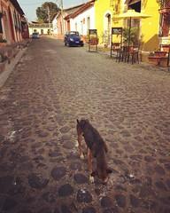 Vira-lata #suchitoto #elsalvador #viralata #cachorro #dog