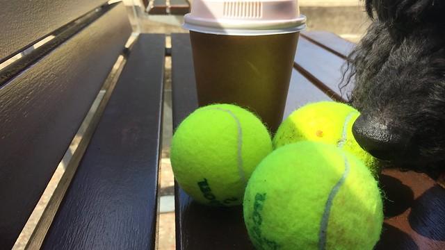 Junior has a nose for tennis, Tennyson, Brisbane