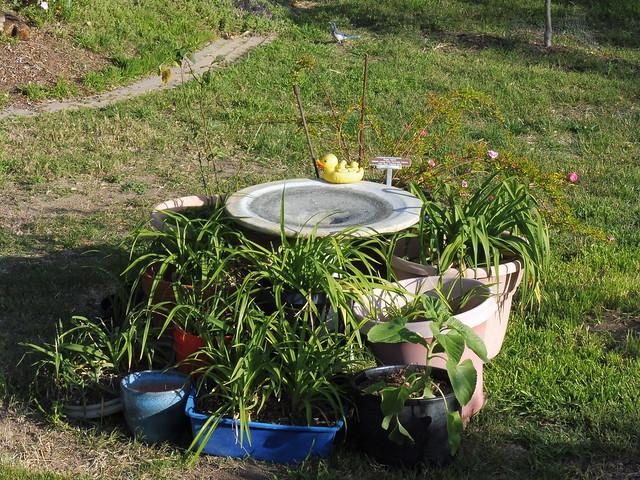 P1030452 tighter grouping of plants around bird bath