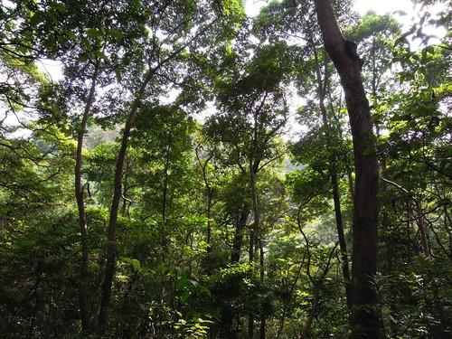 Wed, 04/26/2017 - 12:53 - Tai Po Kau Nature Reserve 20 ha plot, Hong Kong.   Photo credit: Dr. Billy C.H. Hau
