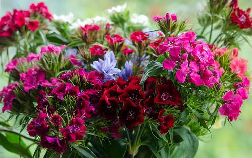Bouquet | by Doolallyally
