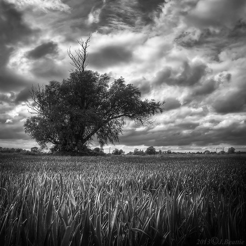 blackandwhite bw tree landscape squareformat blended cambridgeshire fenriverway harlingway