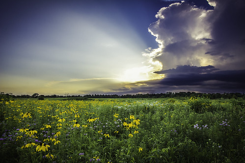 flowers sunset summer storm green field clouds canon day hdr 1022 60d
