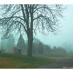 Pastoral Fog