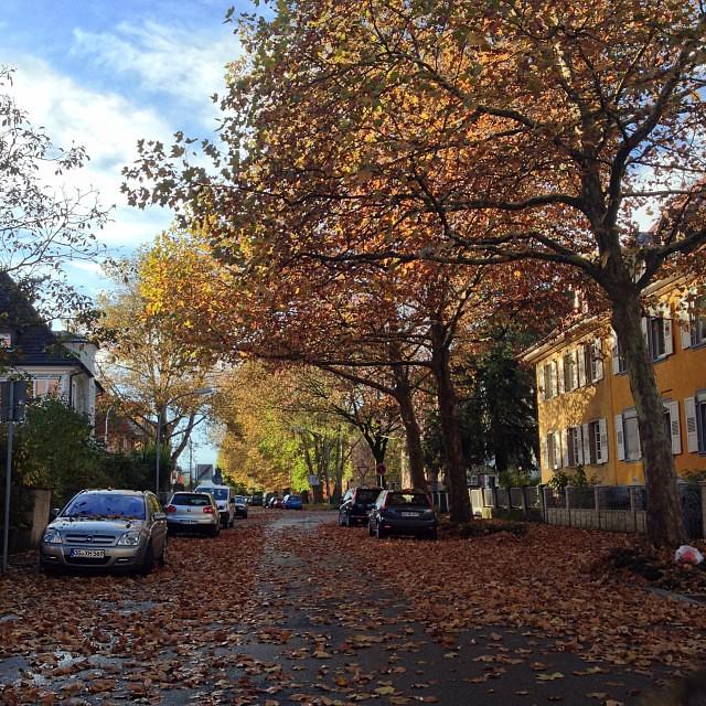 Guten Morgen Herbst Good Morning Fall Schokodinatorin