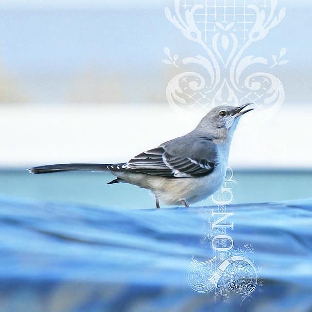 mockingbird songs . . .