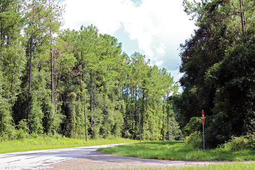 landscape woods forest trees pinetrees road citrussprings florida