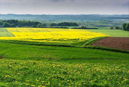 morning flowers yellow sunrise denmark landscapes spring nikon may aarhus d7100 nikon18105mmf3556 nikond7100