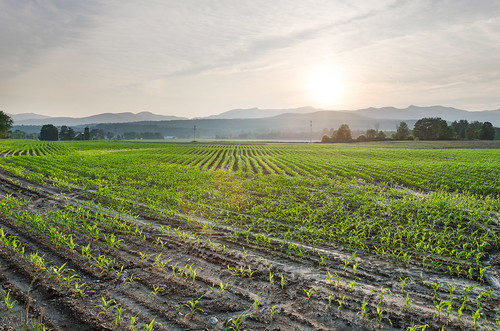 barn corn crop farm field mountains silo sunset vermont vt stowe unitedstates