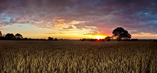 sunset england sky tree field landscape countryside suffolk corn unitedkingdom vibrant wheat flash norfolk drama wortham canoneos60d