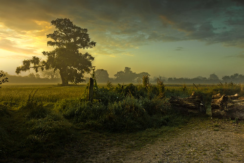 mist painterly sunrise canon landscape countryside suffolk haze oak day cloudy oaktree eastanglia constable wortham eastofengland 60d