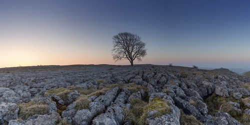 malham canon tree yorkshire sunrise