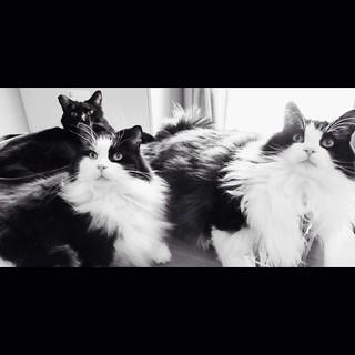 12. fauna #fms_fauna #fmspad #littlemomentsapp #cat #cats #catsofinstagram #tuxedocat #tuxedocats #tuxedocatsofinstagram #blackcat #blackcats #blackcatsofinstagram #seamusofinstagram #felixofinstagram #oscarofinstagram #officecat #officecats #officekittie | by Laurel Storey, CZT