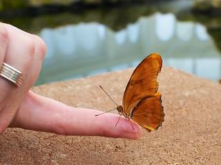 butterfly garden | by juli anna