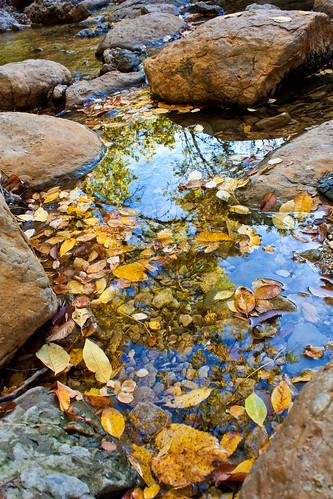 autumn fall nature colors leaves texas tx plano arborhillsnaturepreserve