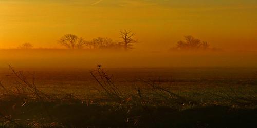 trees mist tree field fog sunrise bedford bedfordshire felton robertfelton duckscross