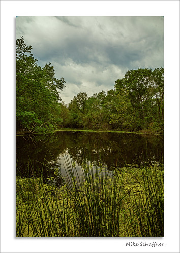 park trees clouds reeds spring pond texas unitedstates algae pundt