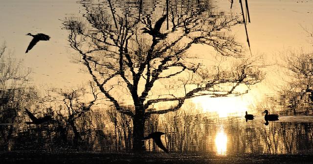 Dream Pond Morning