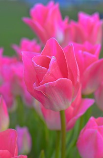 Pretty in Pink | by Kirt Edblom