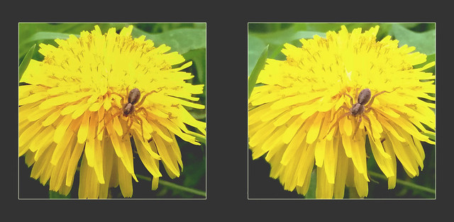 Dandelion and Spider 3 - Parallel 3D