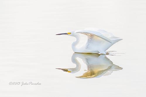 birdwatcher evergladesphotographicsociety