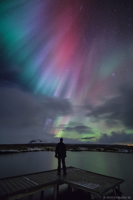 Nature's Christmas lights