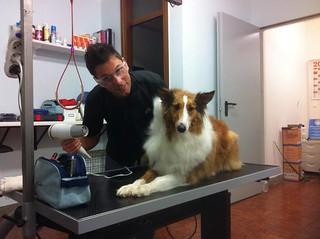 Ginevra | by wellnessdog