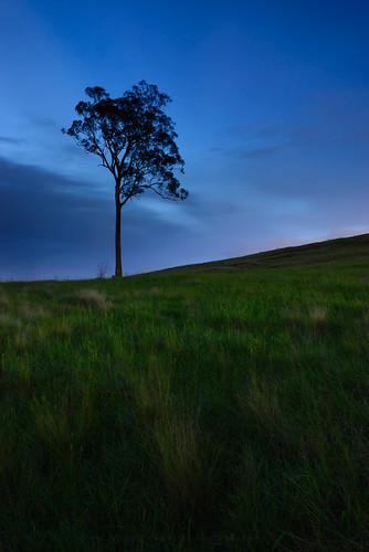 longexposure sunset sky plant tree australia newsouthwales cecilhills gnd06